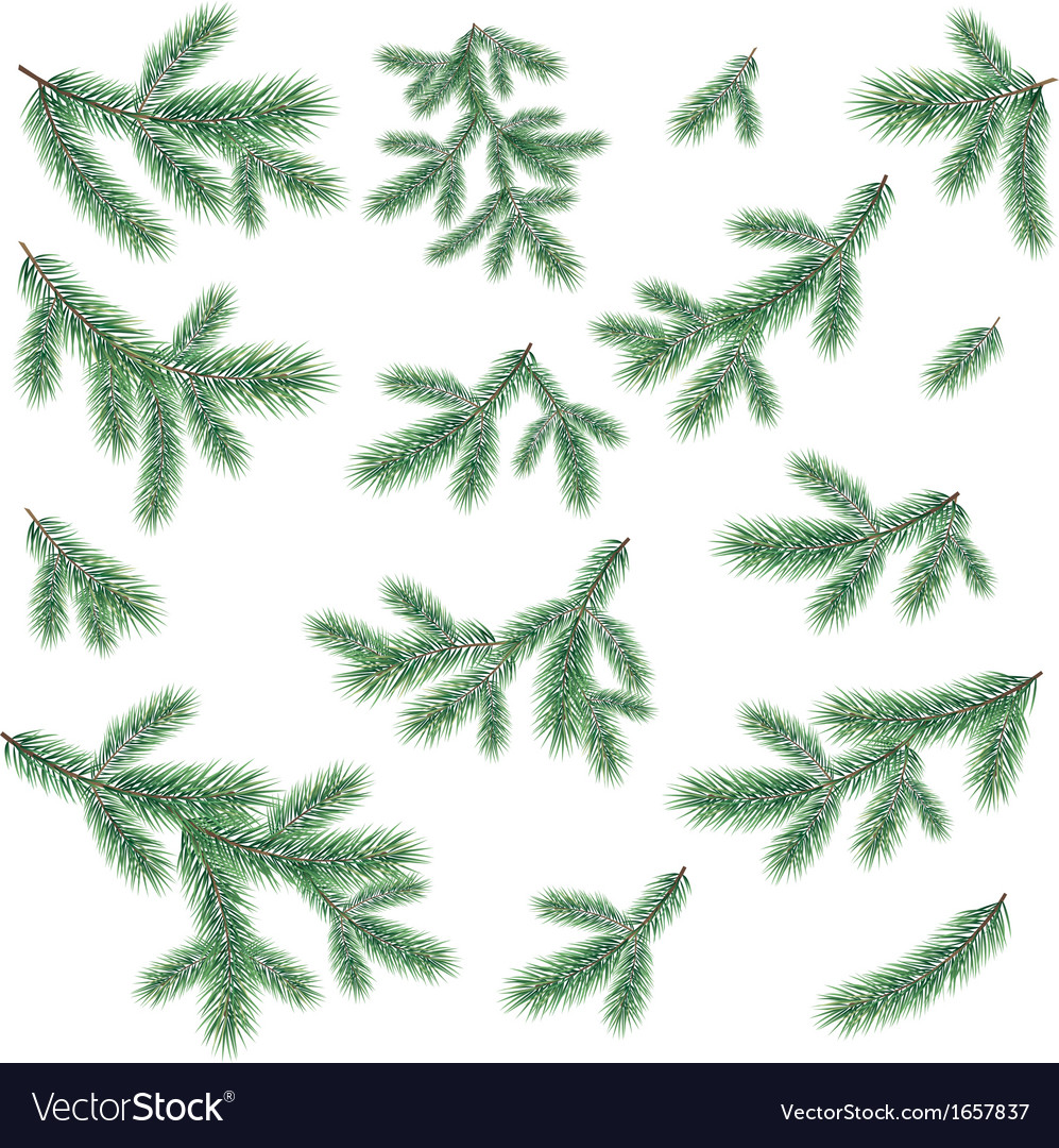 Branches of a christmas tree vector | Price: 1 Credit (USD $1)