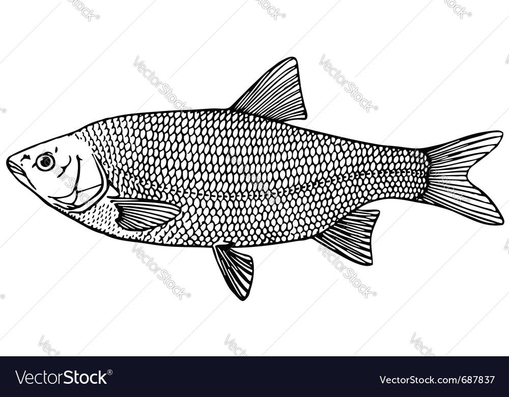 Fish ide orfe vector | Price: 1 Credit (USD $1)