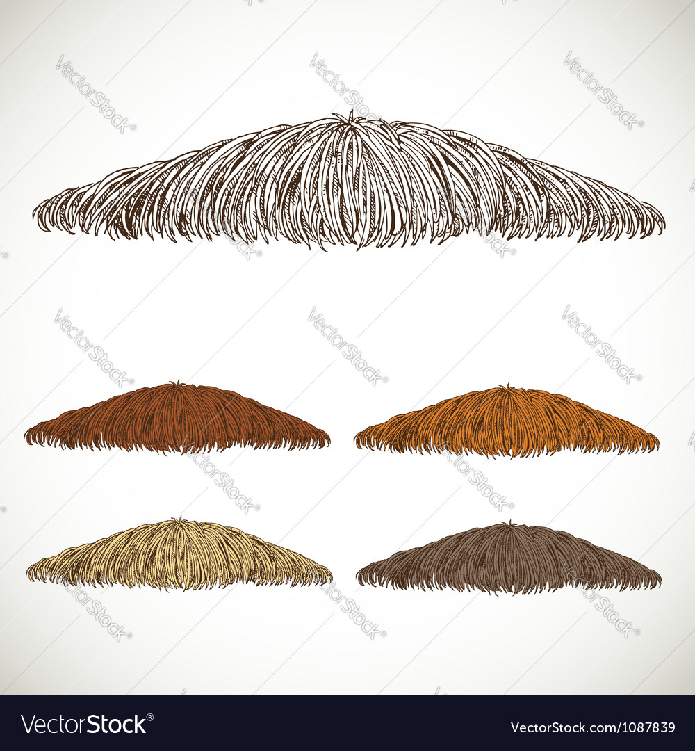 Mustache groomed in several colors set1 vector | Price: 1 Credit (USD $1)