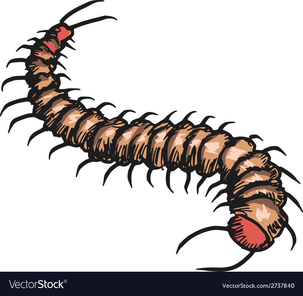 Centipede vector | Price: 1 Credit (USD $1)
