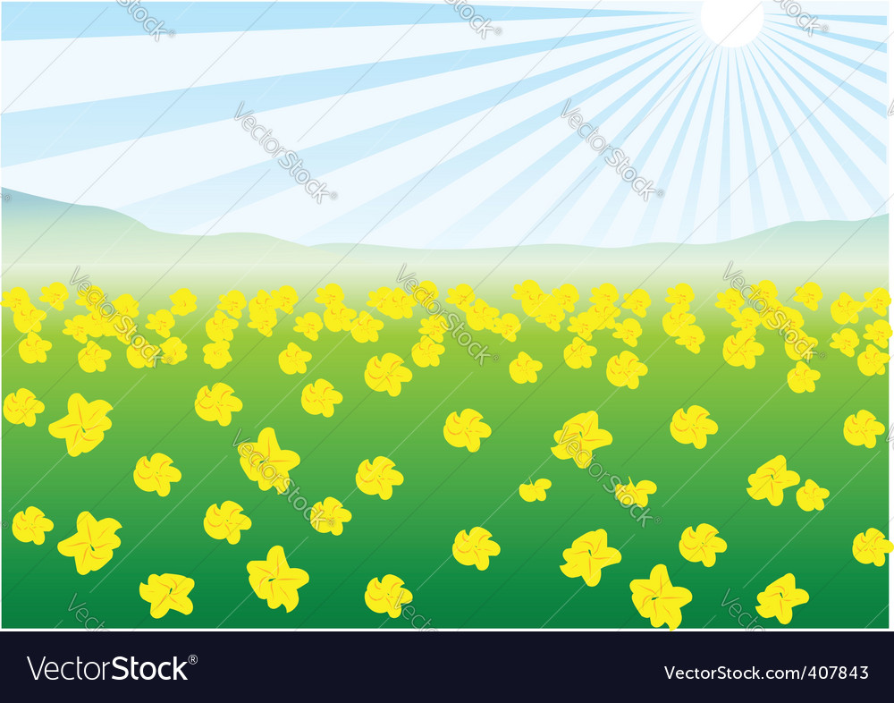 Field of yellow flowers vector   Price: 1 Credit (USD $1)