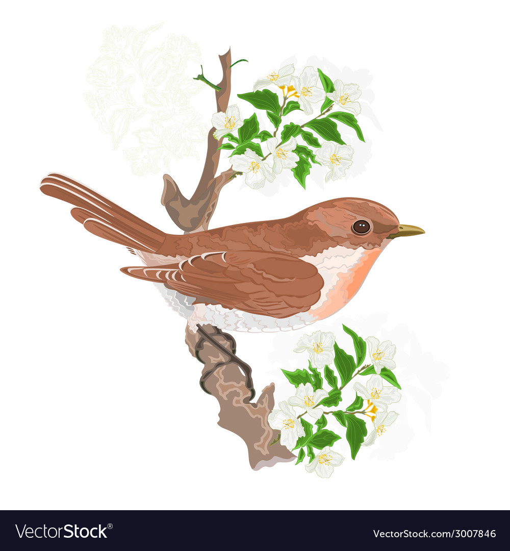 Bird on a twig jasmine vector | Price: 1 Credit (USD $1)