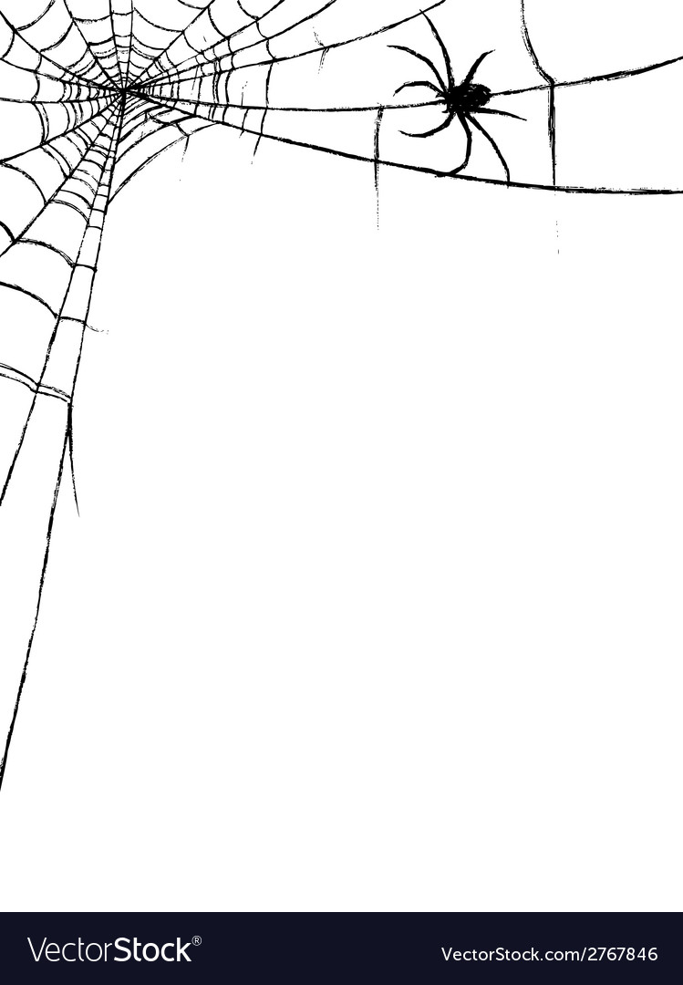 Spider and spiderweb vector