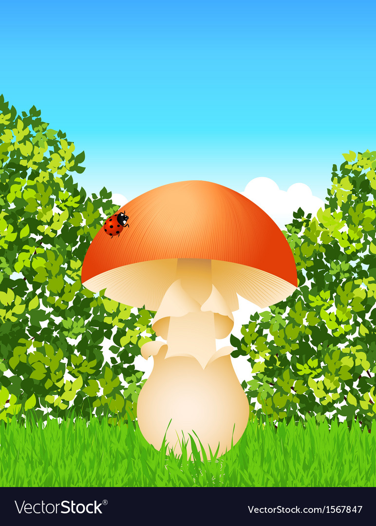 Mushroom in the forest vector | Price: 1 Credit (USD $1)