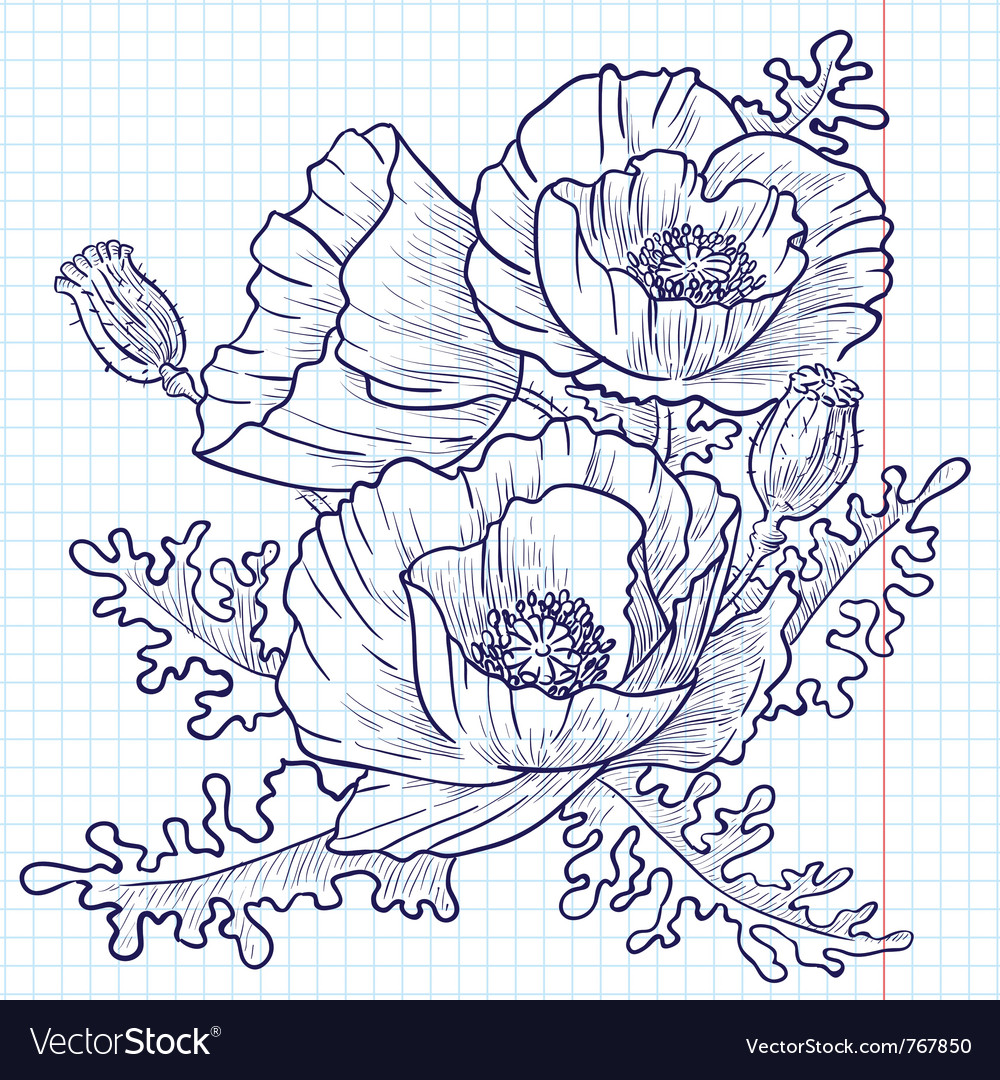 Bouquet of red poppies doodle version vector | Price: 1 Credit (USD $1)