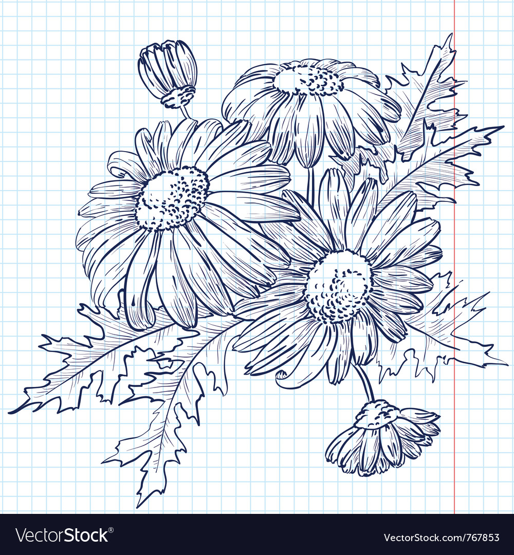 Bouquet of daisies chamomile vector | Price: 1 Credit (USD $1)