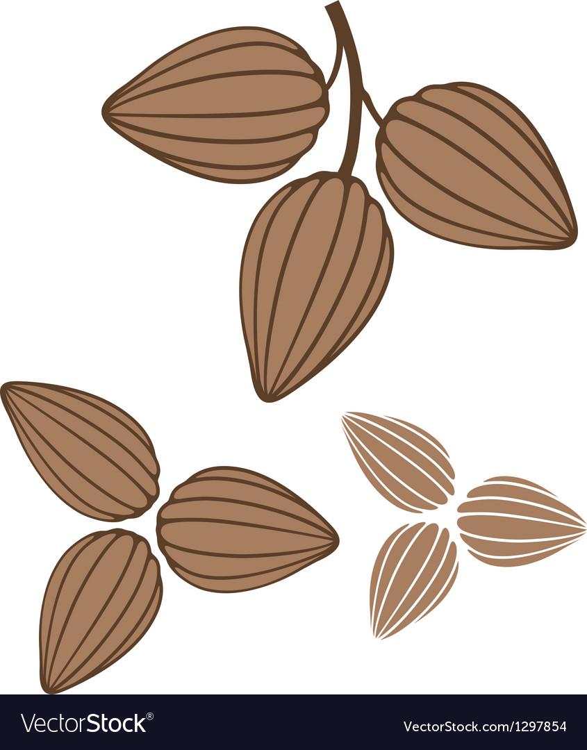 Cocoa vector | Price: 1 Credit (USD $1)