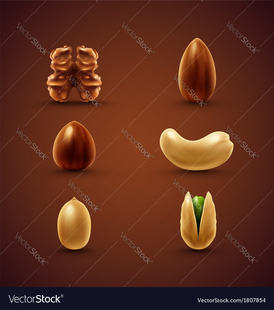 Set of nuts vector | Price: 1 Credit (USD $1)