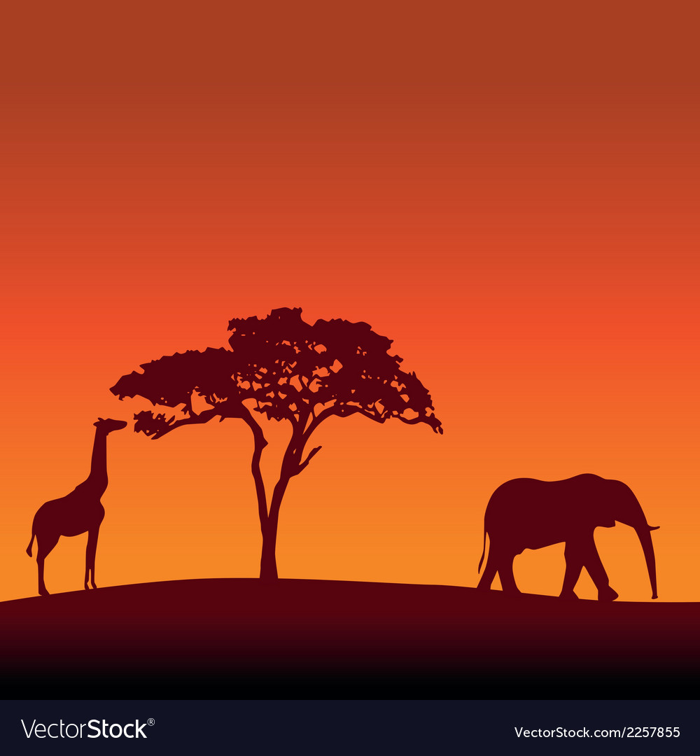 African safari silhouette background vector | Price: 1 Credit (USD $1)