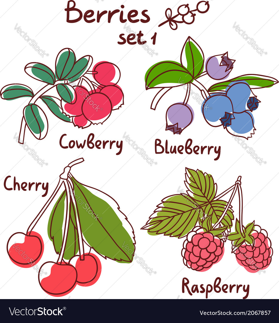 Berries set 1 vector | Price: 1 Credit (USD $1)