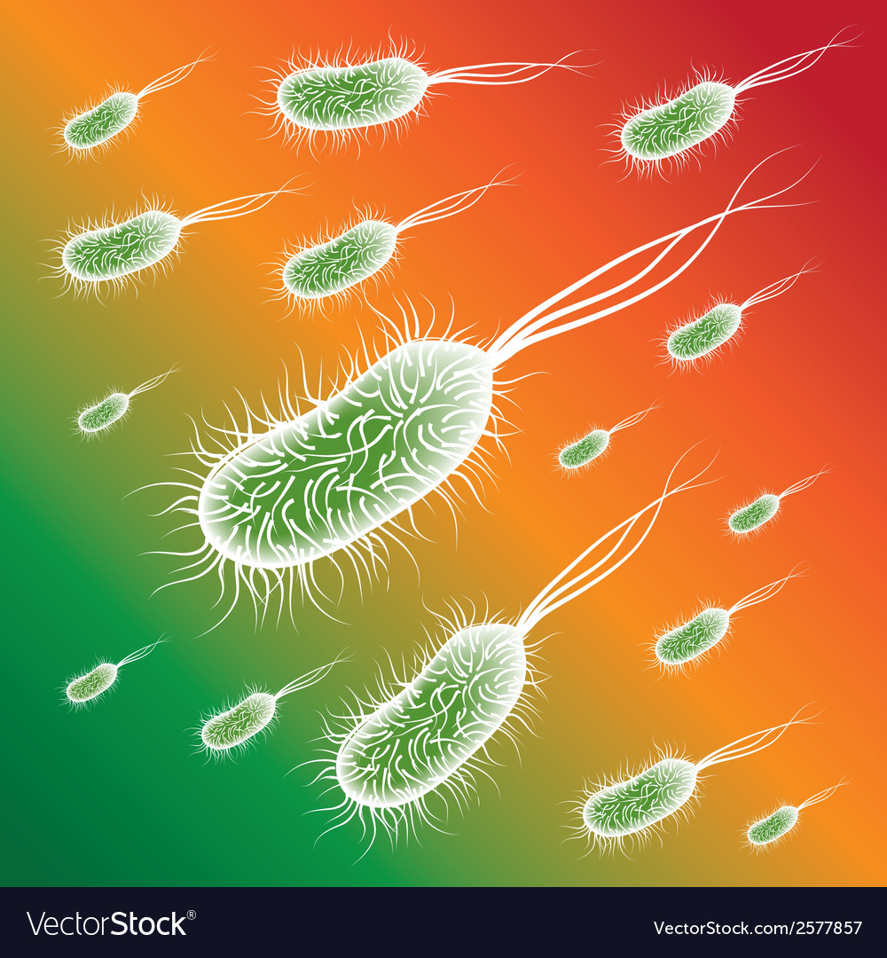 Group of the e coli bacteries on color background vector | Price: 1 Credit (USD $1)