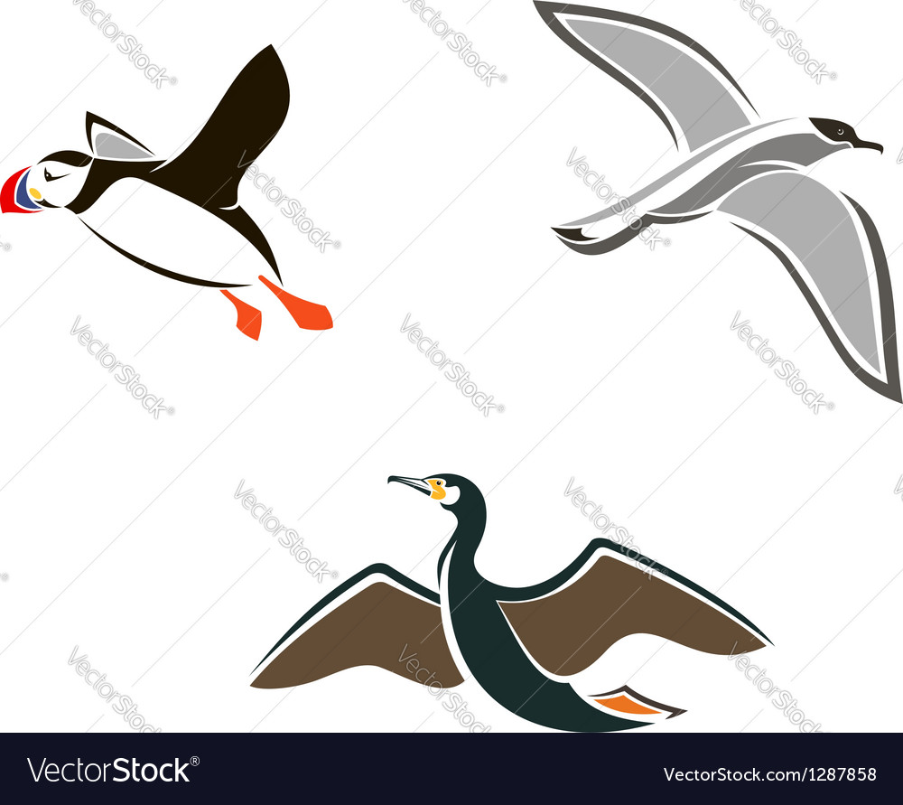 Isolated sea birds vector | Price: 1 Credit (USD $1)