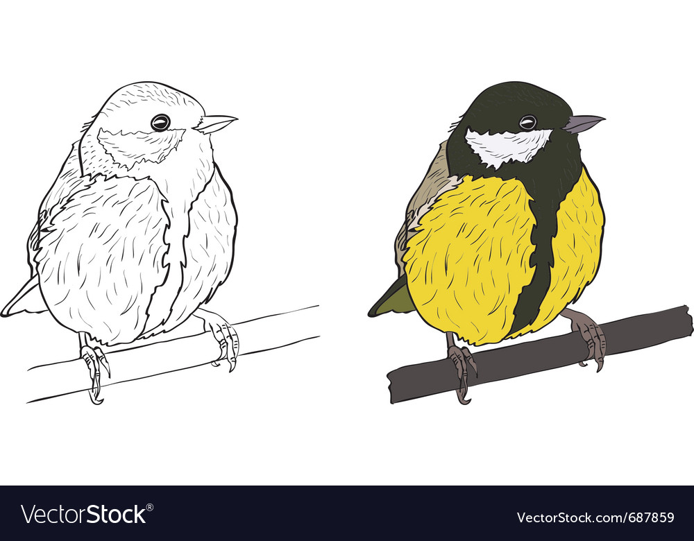 Tomtit vector | Price: 1 Credit (USD $1)