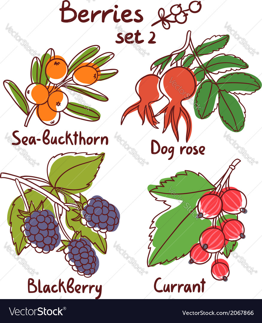 Berries set 2 vector | Price: 1 Credit (USD $1)