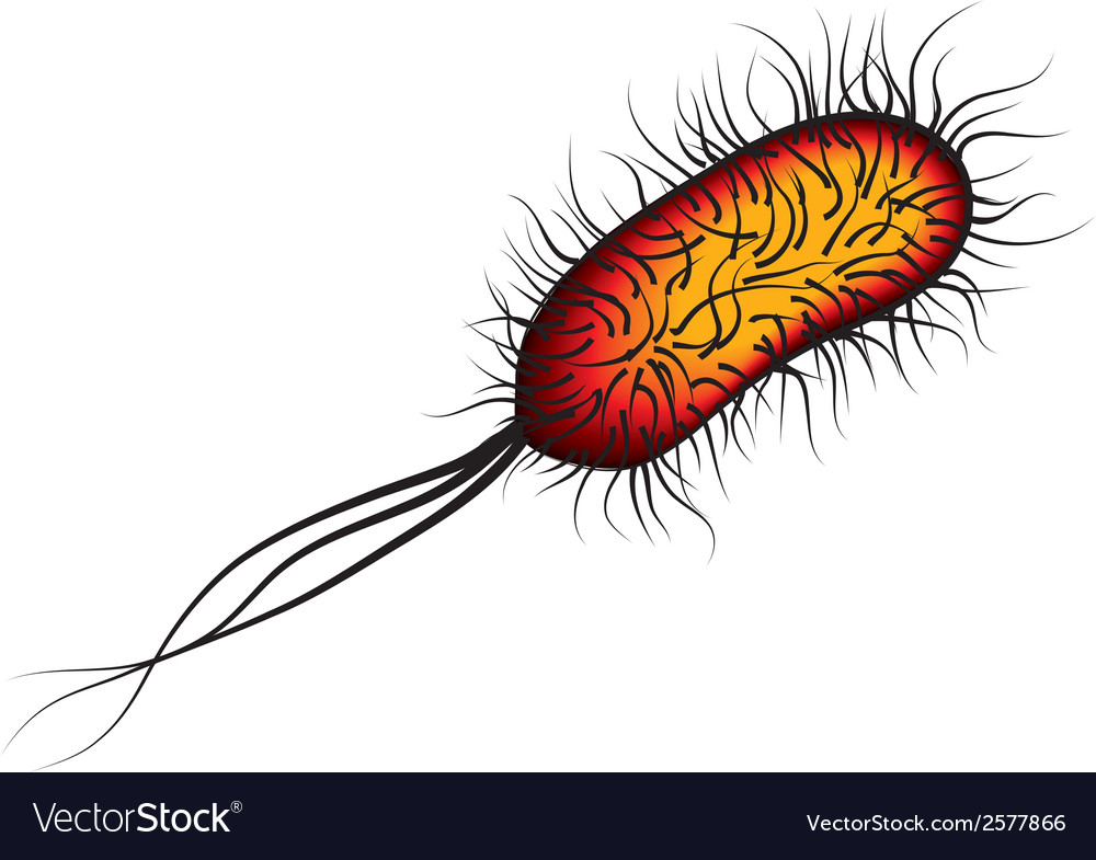 E coli bacteria isolated red on white background vector | Price: 1 Credit (USD $1)