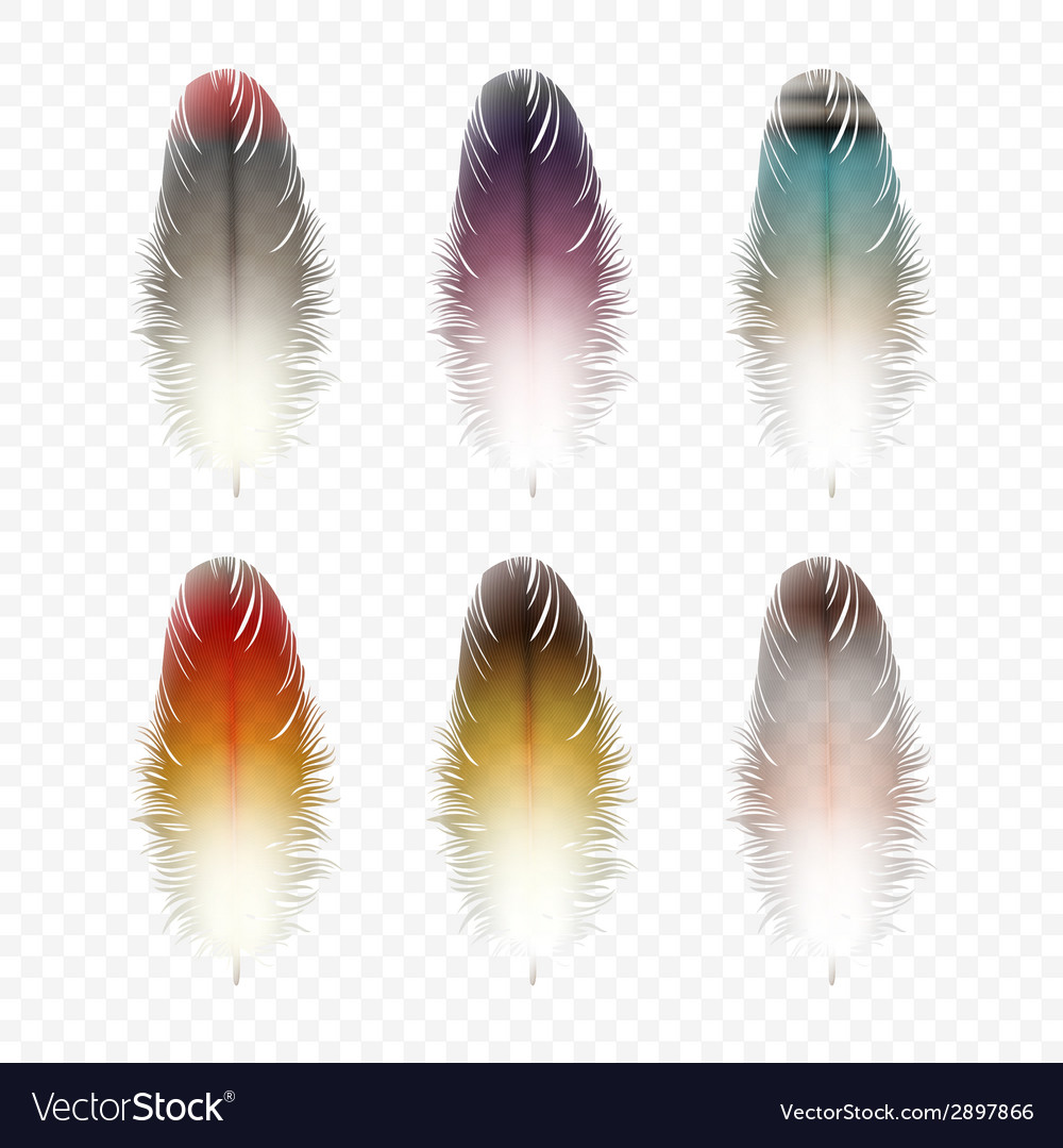 Set of feathers isolated vector | Price: 1 Credit (USD $1)