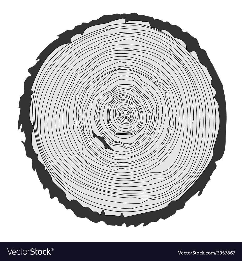 Tree rings and saw cut tree trunk vector | Price: 1 Credit (USD $1)
