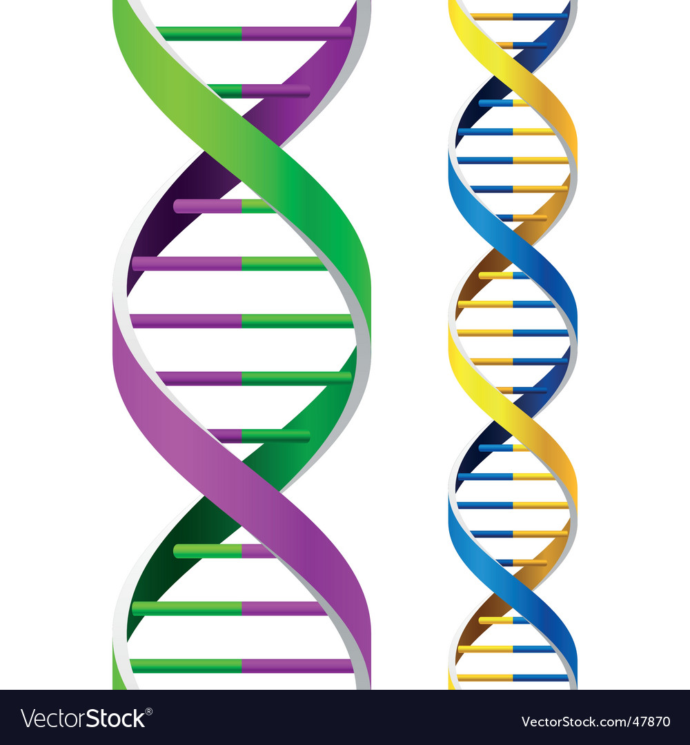 Dna strands vector | Price: 1 Credit (USD $1)