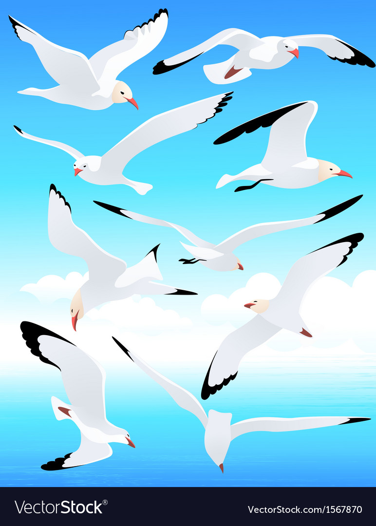 Sea gull set vector | Price: 1 Credit (USD $1)