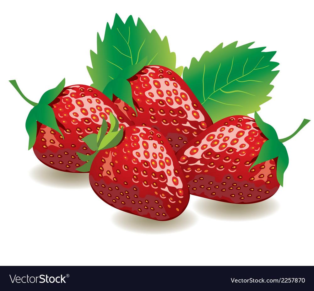 Strawberries vector | Price: 1 Credit (USD $1)