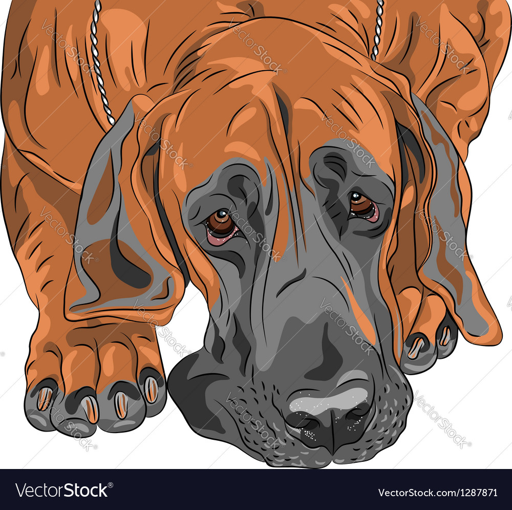 Sad dog great dane vector | Price: 1 Credit (USD $1)