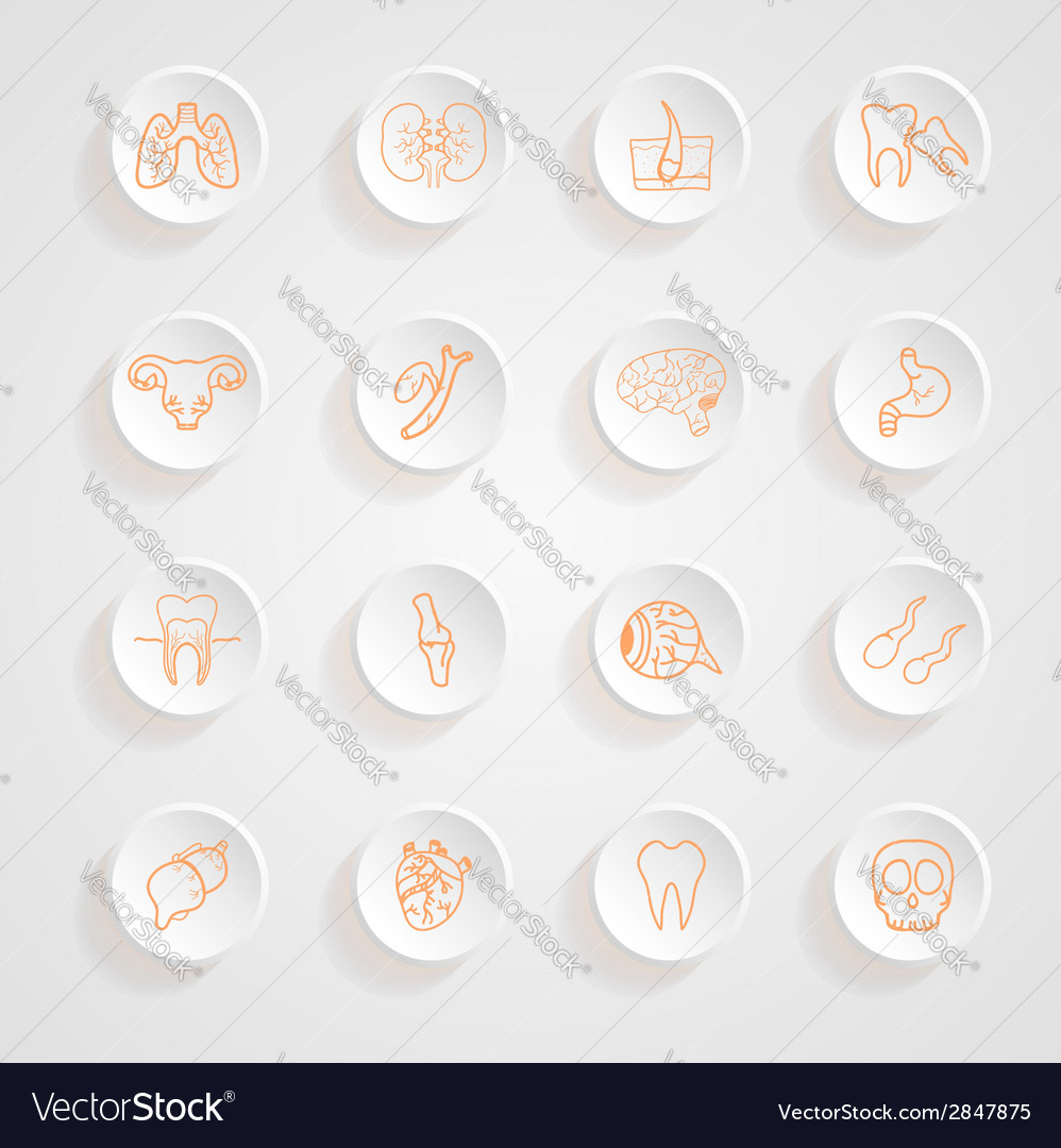 Set of contour of internal human icons button shad vector | Price: 1 Credit (USD $1)
