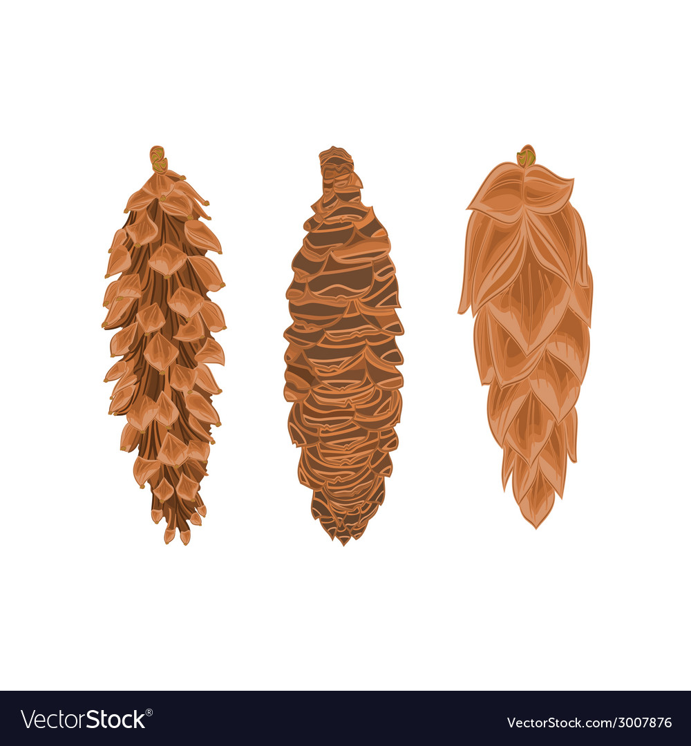 Three pine cones spruce cones christmas tree vector | Price: 1 Credit (USD $1)