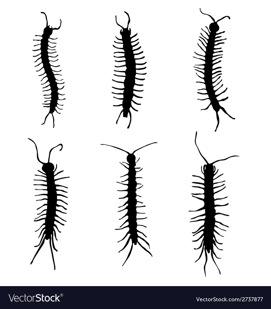 Millipedes vector | Price: 1 Credit (USD $1)