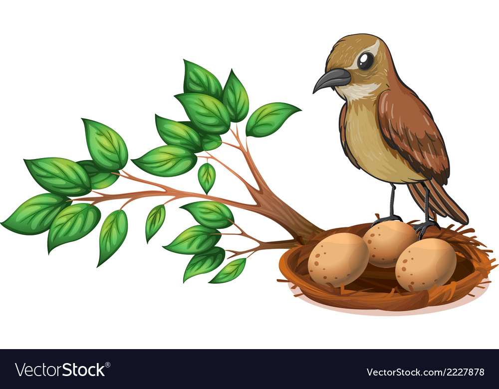 A bird at the branch of a tree watching the nest vector | Price: 1 Credit (USD $1)
