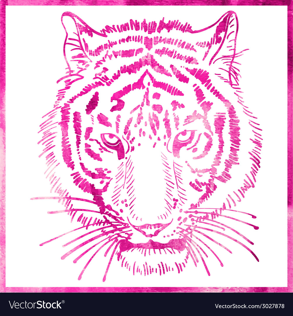 Head of tiger is in a watercolor artwork in pink vector | Price: 1 Credit (USD $1)
