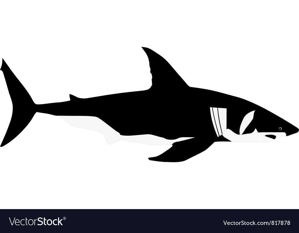 White shark vector | Price: 1 Credit (USD $1)