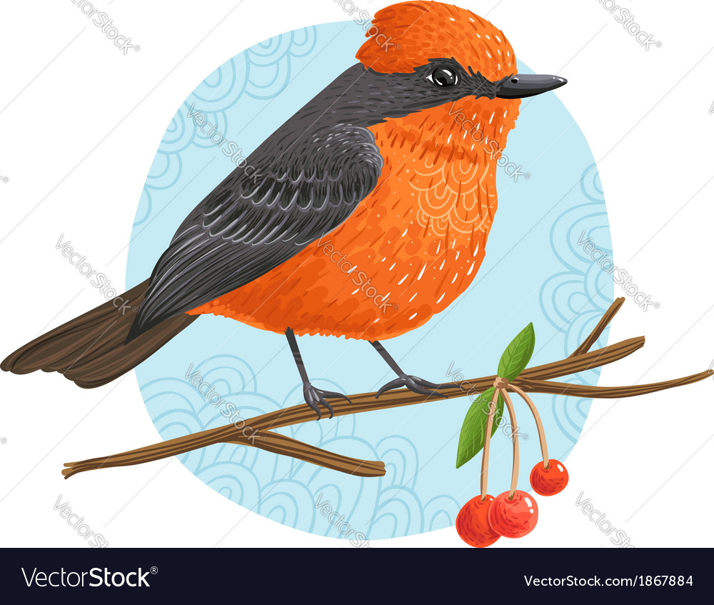 Vermilion flycatcher vector | Price: 3 Credit (USD $3)
