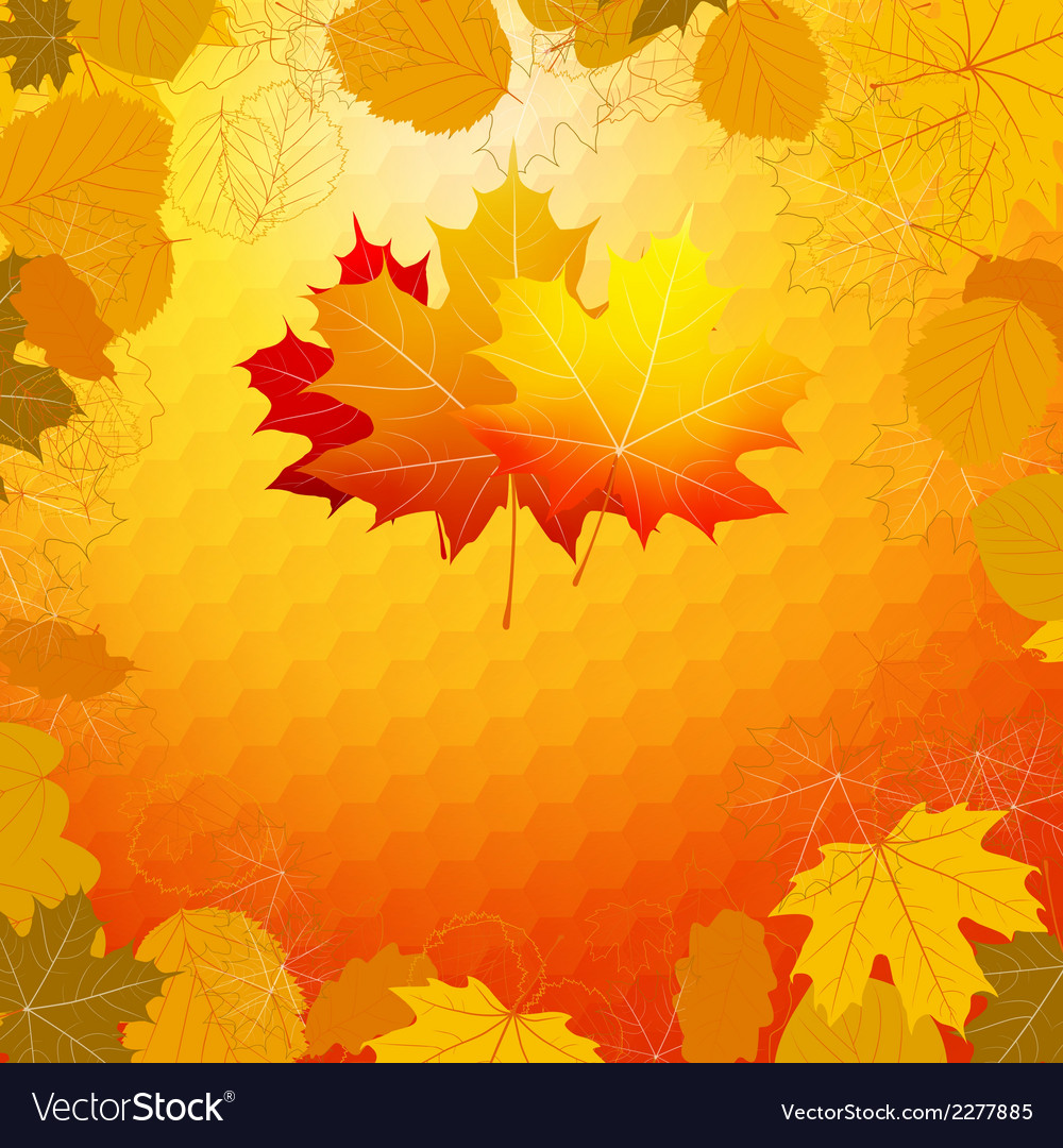 Colorful geometric card with maple plus eps10 vector | Price: 1 Credit (USD $1)