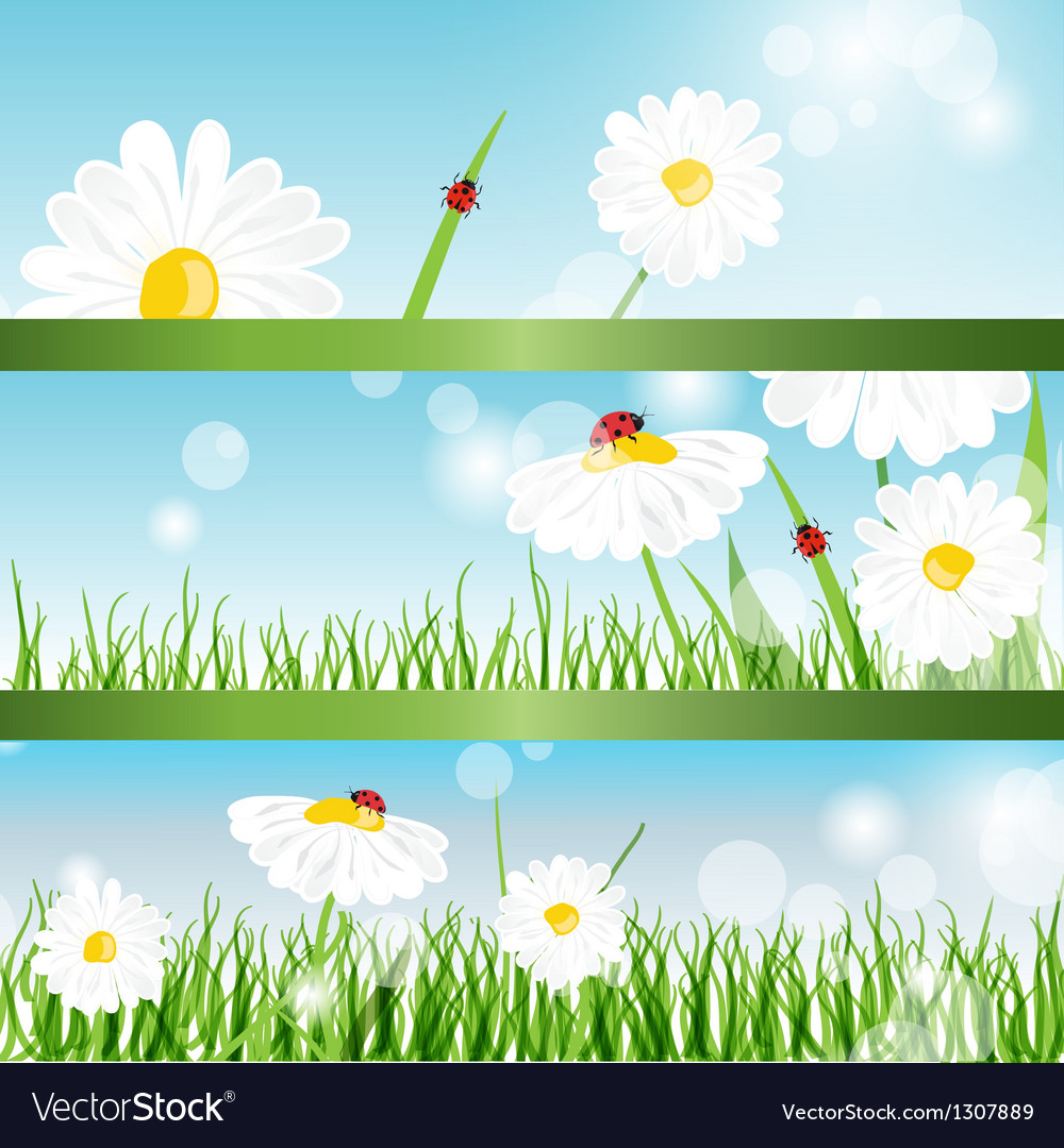 Summer banners with daisy and ladybugs in green vector   Price: 1 Credit (USD $1)
