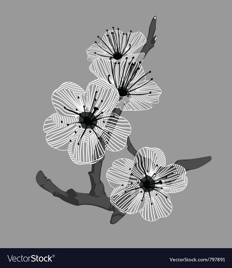 White orchid flowers vector | Price: 1 Credit (USD $1)