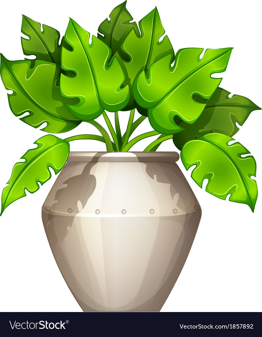 A plant with a heart-shaped leaves vector   Price: 1 Credit (USD $1)
