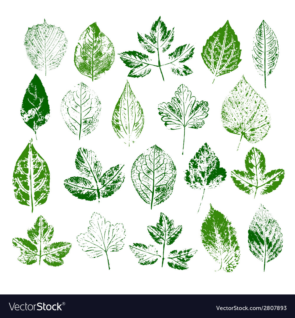 Paint stamps of different leaves set vector | Price: 1 Credit (USD $1)