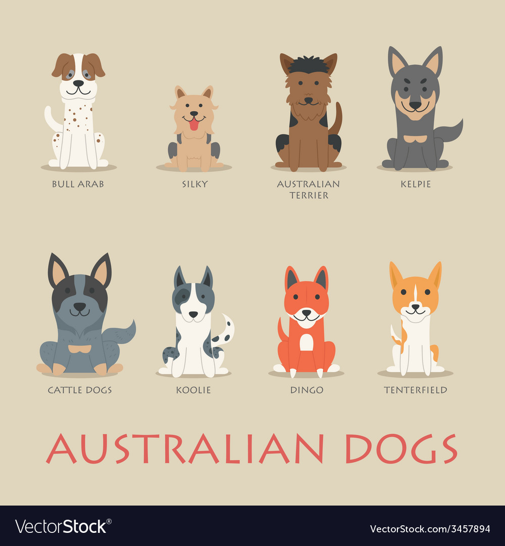 Set of australian dogs vector | Price: 1 Credit (USD $1)