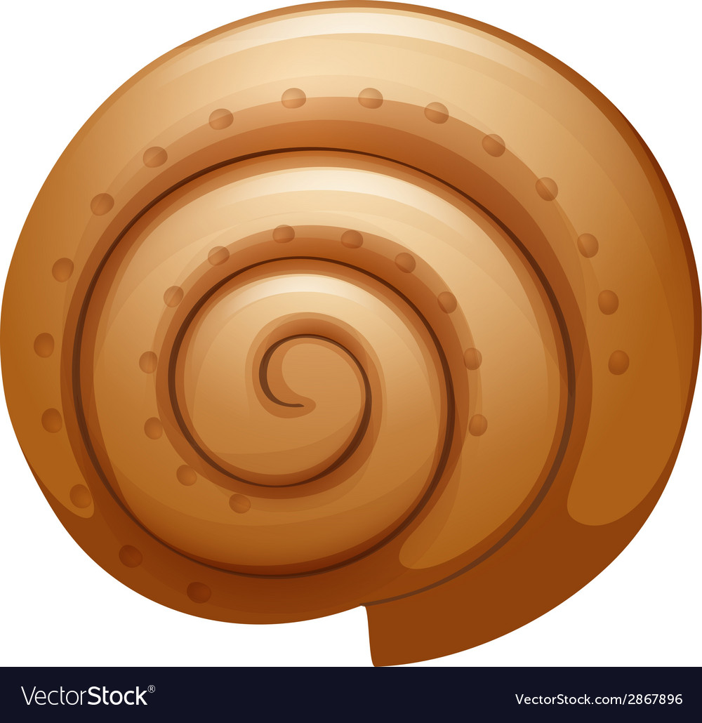A seashell vector | Price: 1 Credit (USD $1)