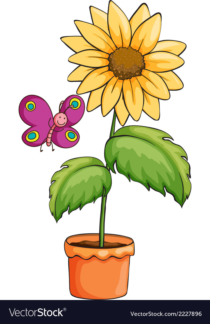 A sunflower plant in a pot vector   Price: 1 Credit (USD $1)