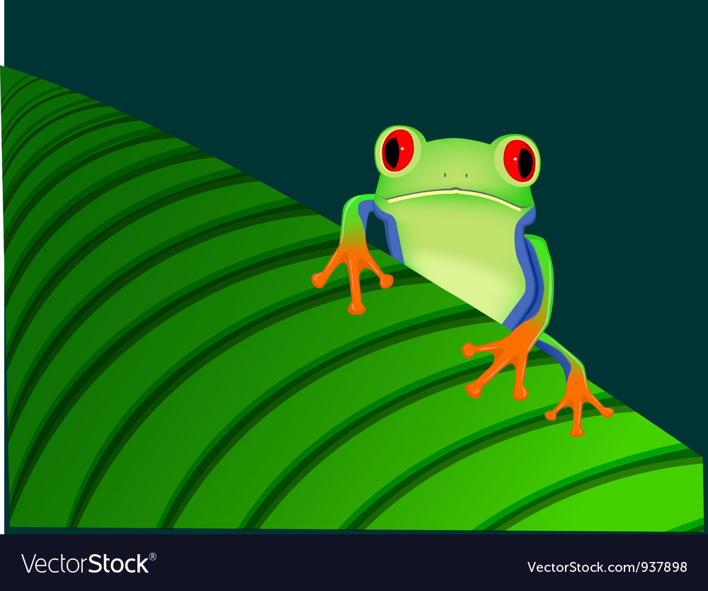 Red eyed tree frog sitting on leaf vector | Price: 1 Credit (USD $1)