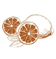 Lemons with leaves vector