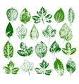 Paint stamps of different leaves set vector