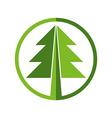 Green round christmas tree icon on white vector