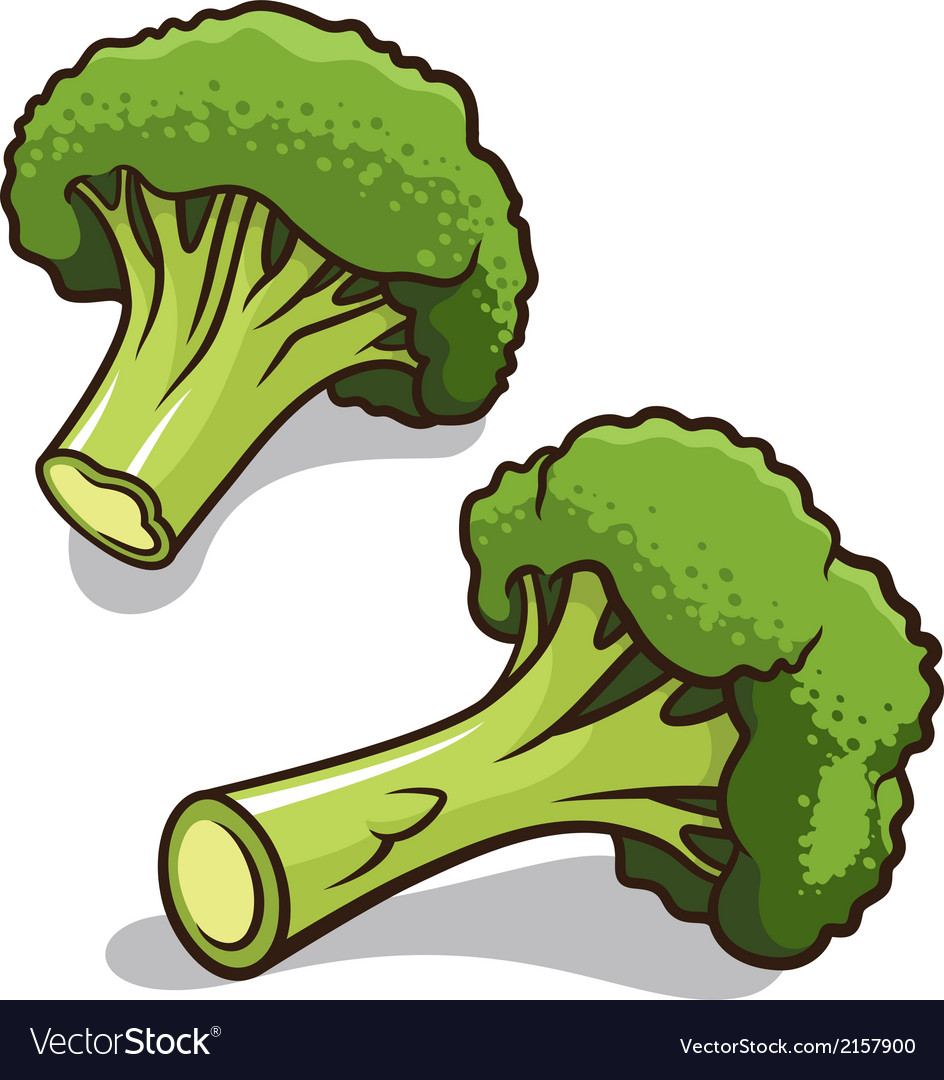 Broccoli vector   Price: 1 Credit (USD $1)