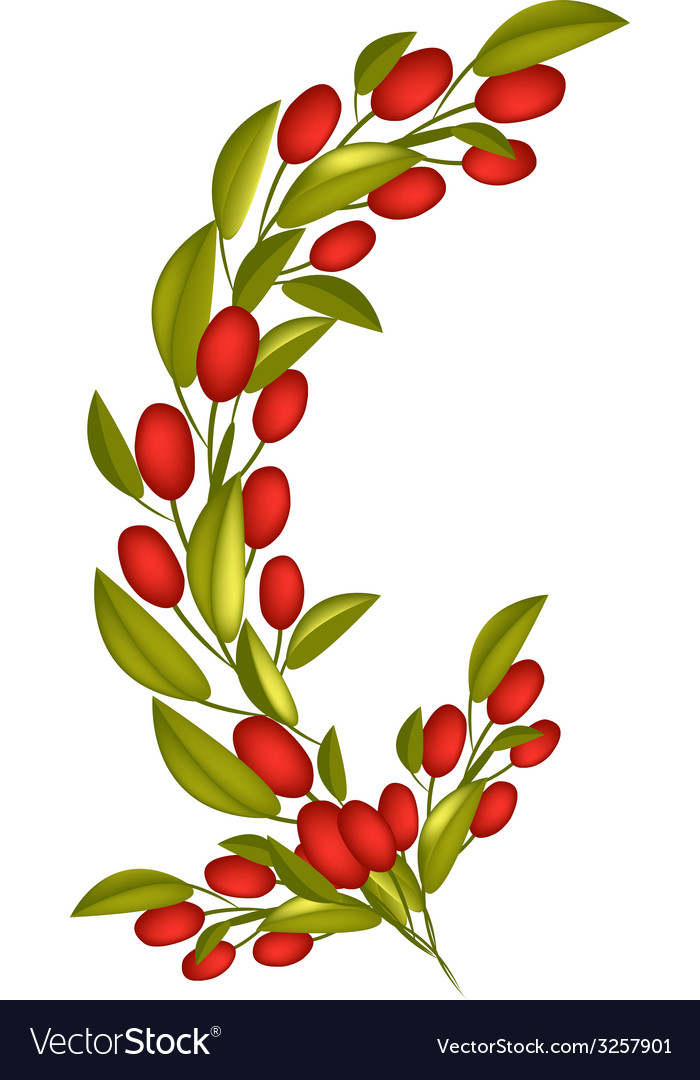 Red ripe olives on a branch on white background vector | Price: 1 Credit (USD $1)