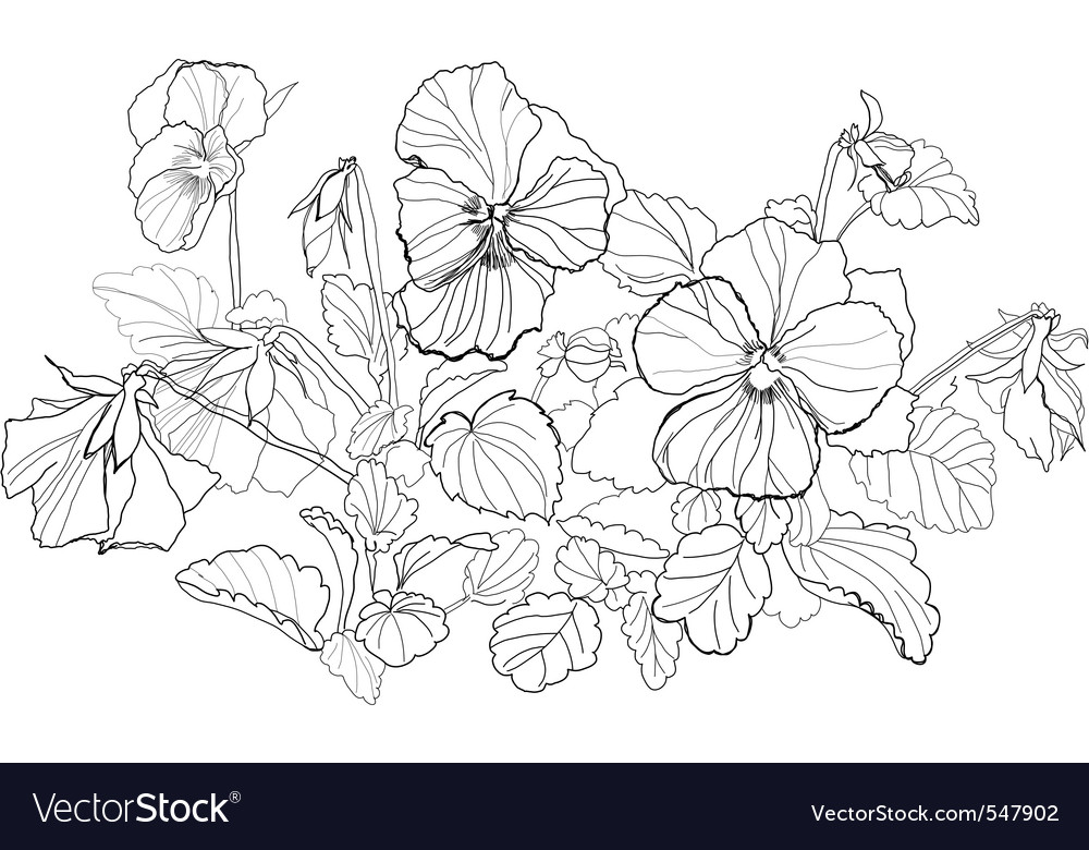 Viola flowers drawing on white background vector | Price: 1 Credit (USD $1)