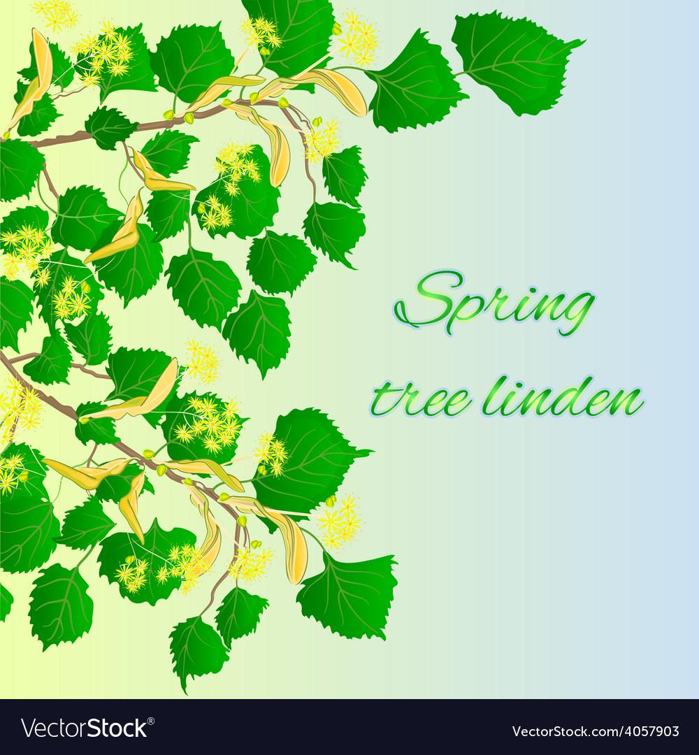 Spring tree linden spring green background vector | Price: 1 Credit (USD $1)