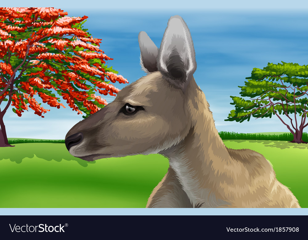 Kangaroo vector | Price: 5 Credit (USD $5)