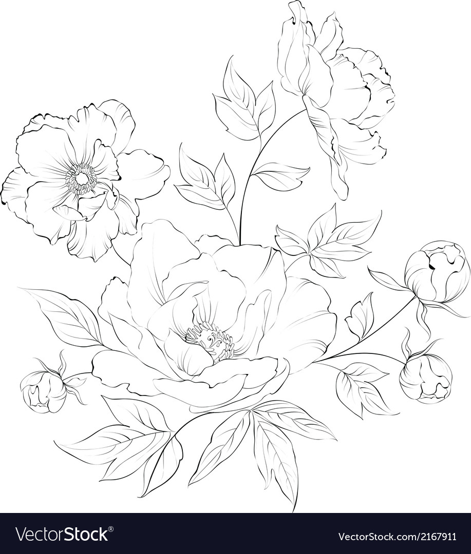 Bush of beautiful peonies vector | Price: 1 Credit (USD $1)